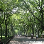 Central Park trees.  Walking through Central Park on a sunny day.  Central Park is said to be the lungs of New York City.