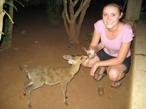 Savannah bottle feeding in Benin