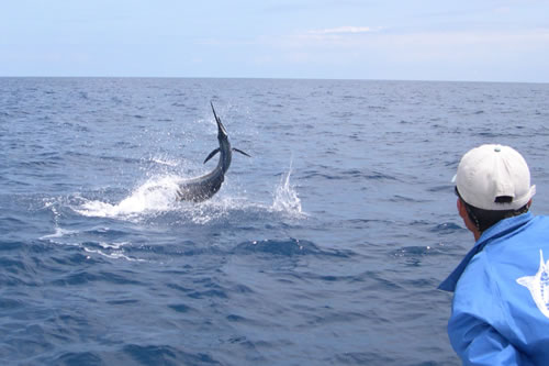Deep sea fishing in louisiana backpacking diplomacy for Deep sea fishing la