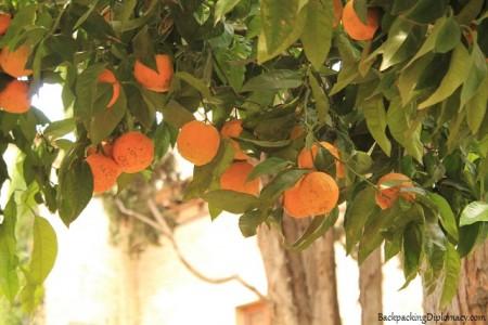 Orange trees in Granada Alhambra