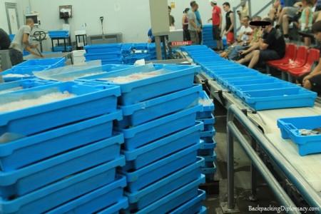 fish market costa brava llanca