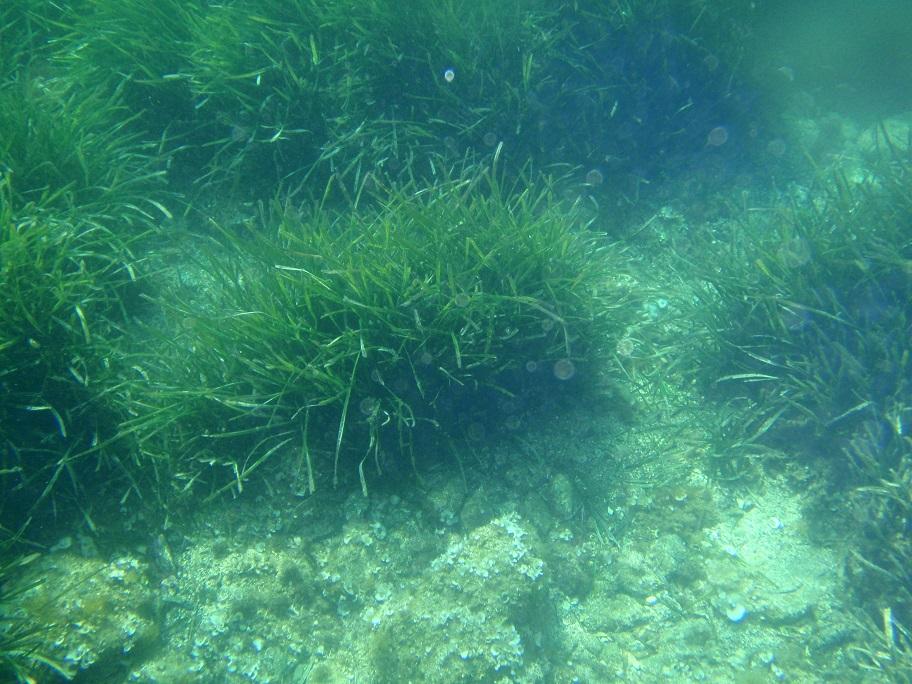 Costa Brava snorkeling